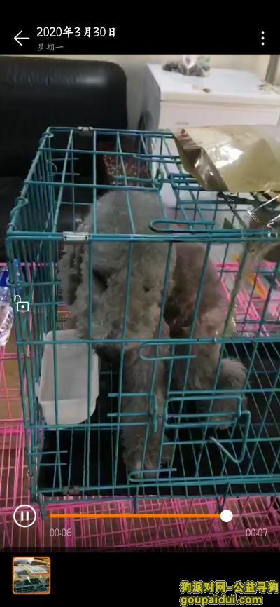 温州寻狗网,新购贝林顿丢失,龙湾万科龙庭,它是一只非常可爱的宠物狗狗,希望它早日回家,不要变成流浪狗。
