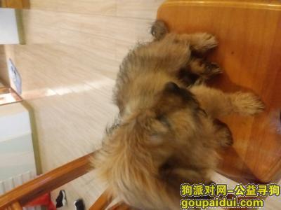 龙岩寻狗启示,给它洗澡时挺乖的,应该是有主人的,希望主人能看到,它是一只非常可爱的宠物狗狗,希望它早日回家,不要变成流浪狗。