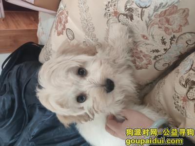 济宁寻狗,串串狗叫小麦 见到者请联系,它是一只非常可爱的宠物狗狗,希望它早日回家,不要变成流浪狗。