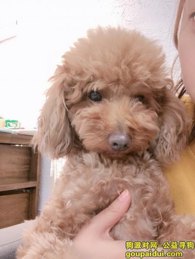长沙找狗,寻到重谢笨笨你快回来,它是一只非常可爱的宠物狗狗,希望它早日回家,不要变成流浪狗。