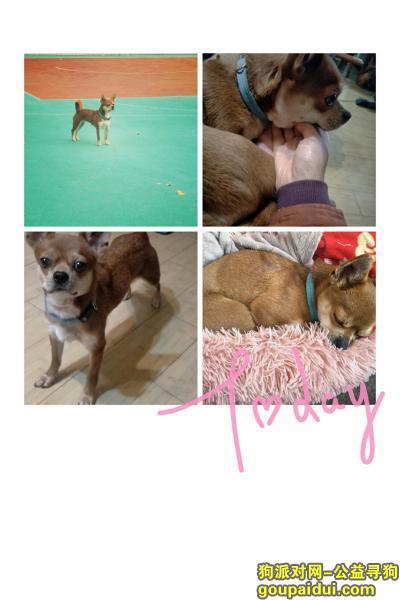 徐州找狗,寻爱狗旺旺,在东店子,开明市场附近丢失,归还者酬谢1000元,它是一只非常可爱的宠物狗狗,希望它早日回家,不要变成流浪狗。