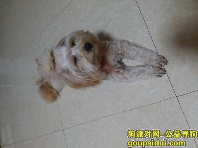 ,狗狗于2020年4月3日晚上6点于艾溪湖东创新二路广阳小区D区京东京车会附近走失,它是一只非常可爱的宠物狗狗,希望它早日回家,不要变成流浪狗。