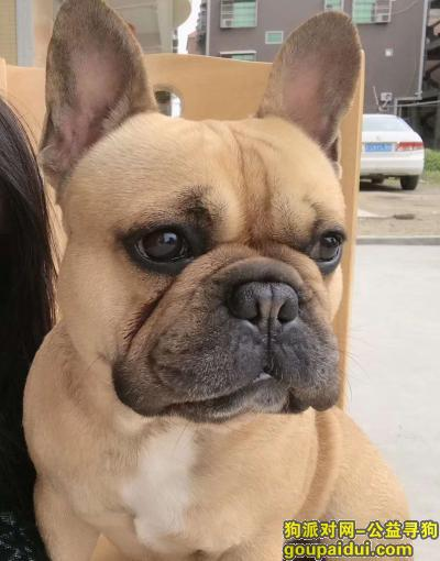 汕头寻狗启示,找法斗,多年陪伴希望好心人有看到联系我,它是一只非常可爱的宠物狗狗,希望它早日回家,不要变成流浪狗。