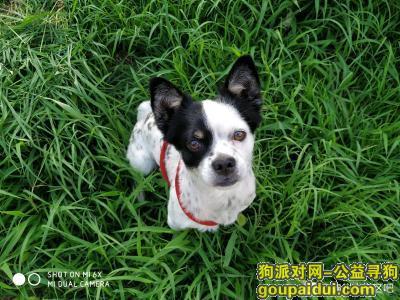 ,4月1日古塔区六厂公园失踪,捡到者酬谢两千元,主人很想他,它是一只非常可爱的宠物狗狗,希望它早日回家,不要变成流浪狗。