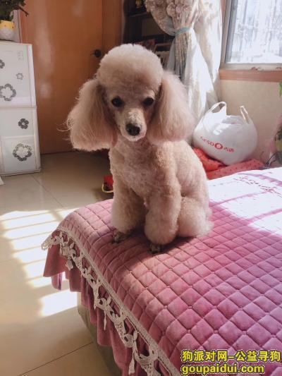 雅安寻狗网,6号下午走失的,它是一只非常可爱的宠物狗狗,希望它早日回家,不要变成流浪狗。