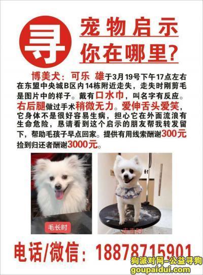 南宁寻狗启示,有酬寻宠,可乐早日回家,它是一只非常可爱的宠物狗狗,希望它早日回家,不要变成流浪狗。