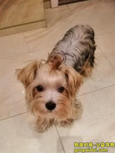 南京找狗,主人焦急万分,酬谢3000元寻狗,它是一只非常可爱的宠物狗狗,希望它早日回家,不要变成流浪狗。