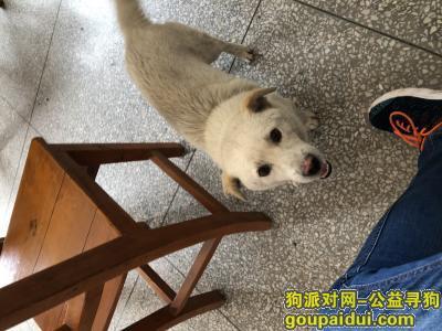安庆找狗,寻狗启示,寻找一只小白狗。,它是一只非常可爱的宠物狗狗,希望它早日回家,不要变成流浪狗。