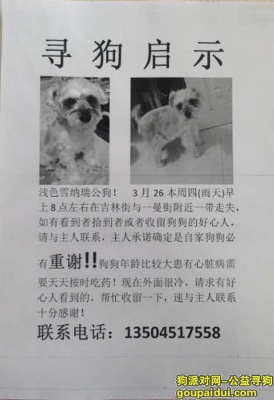 ,龙江街附近丢失爱犬,重金悬赏收留者,它是一只非常可爱的宠物狗狗,希望它早日回家,不要变成流浪狗。