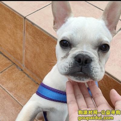 贺州寻狗启示,广西贺州市八步区寻狗:糯米回家吧,它是一只非常可爱的宠物狗狗,希望它早日回家,不要变成流浪狗。