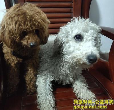 长沙丢狗,3月25号在长沙雨花区走丢的,图上白色那只,,它是一只非常可爱的宠物狗狗,希望它早日回家,不要变成流浪狗。