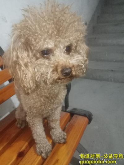 厦门捡到狗,SM广场地铁口附近捡到狗,它是一只非常可爱的宠物狗狗,希望它早日回家,不要变成流浪狗。