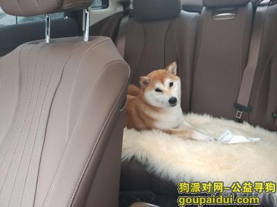 杭州找狗,好心人帮忙找狗狗,谢谢,它是一只非常可爱的宠物狗狗,希望它早日回家,不要变成流浪狗。