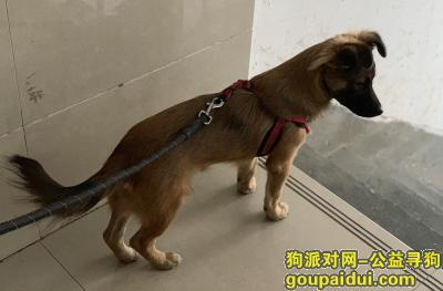无锡丢狗,已找到,它是一只非常可爱的宠物狗狗,希望它早日回家,不要变成流浪狗。