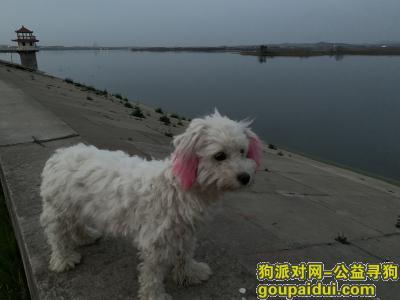 ,寻找在枣阳火车站附近走丢的狗妈妈,它是一只非常可爱的宠物狗狗,希望它早日回家,不要变成流浪狗。