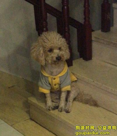 佛山寻狗启示,佛山市禅城区深华路9号重金寻找泰迪,它是一只非常可爱的宠物狗狗,希望它早日回家,不要变成流浪狗。