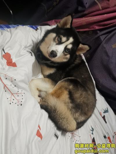 湖州寻狗网,寻狗启示(高价酬谢),它是一只非常可爱的宠物狗狗,希望它早日回家,不要变成流浪狗。
