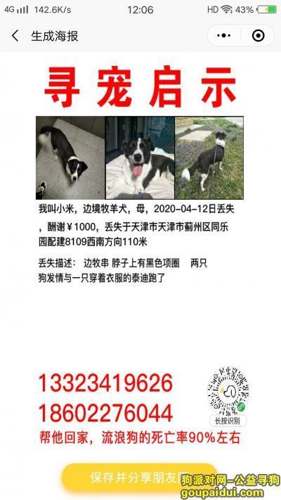 天津丢狗,本人于4月12日下午三点多在天津市蓟州区同乐园附近丢失一只边牧串串,它是一只非常可爱的宠物狗狗,希望它早日回家,不要变成流浪狗。