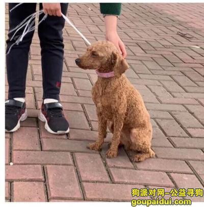 ,4.13下午福州四中附近捡到泰迪一只,求爱心人领养。,它是一只非常可爱的宠物狗狗,希望它早日回家,不要变成流浪狗。