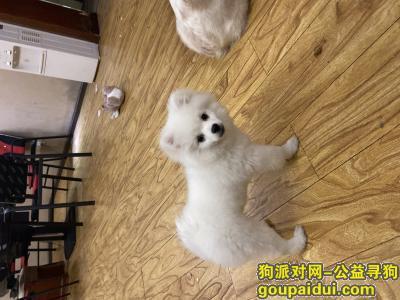 文山寻狗启示,云南省文山市城北旁边三鑫大酒店,它是一只非常可爱的宠物狗狗,希望它早日回家,不要变成流浪狗。