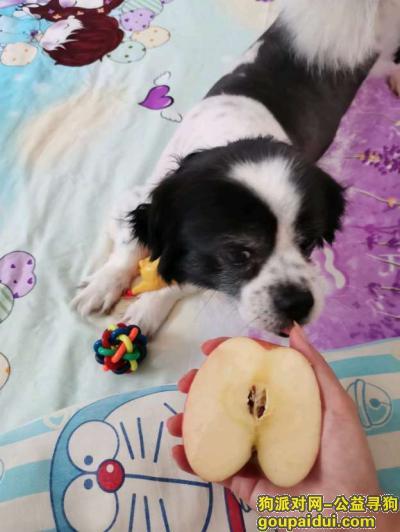 ,三亚吉阳区港门村东一巷狗狗丢失,它是一只非常可爱的宠物狗狗,希望它早日回家,不要变成流浪狗。