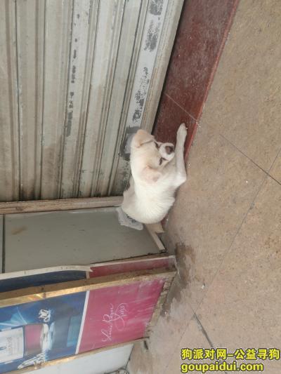 惠州寻狗启示,捡到一只狗,希望找到主人或收养的人,不需要任何酬金,感谢,它是一只非常可爱的宠物狗狗,希望它早日回家,不要变成流浪狗。