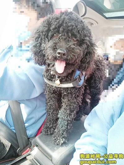 焦作寻狗,急寻爱狗,黑色长腿泰迪,重谢,它是一只非常可爱的宠物狗狗,希望它早日回家,不要变成流浪狗。