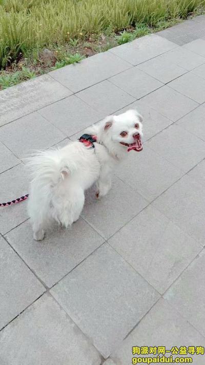 【重庆找狗】,重庆潼南的 求帮忙 我同学很着急 !!有意者联系我qq 2193303868,它是一只非常可爱的宠物狗狗,希望它早日回家,不要变成流浪狗。