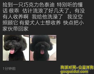 无锡找狗主人,朋友捡到一只巧克力色泰迪,它是一只非常可爱的宠物狗狗,希望它早日回家,不要变成流浪狗。