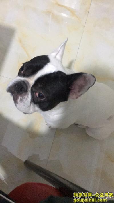 东莞寻狗,东莞常平镇小狗黑白花法斗,重谢,它是一只非常可爱的宠物狗狗,希望它早日回家,不要变成流浪狗。