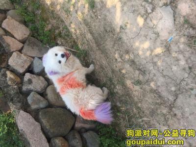 泉州寻狗网,给丢失的狗狗重新找回主人,它是一只非常可爱的宠物狗狗,希望它早日回家,不要变成流浪狗。
