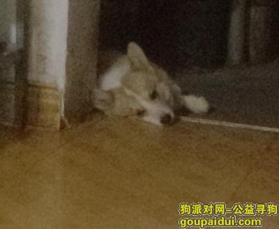 安顺找狗,狗狗丢了特别着急 恳请各位帮帮忙,它是一只非常可爱的宠物狗狗,希望它早日回家,不要变成流浪狗。