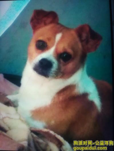 阳江找狗,寻狗启示,请您一定帮忙找一下,非常感谢!!!,它是一只非常可爱的宠物狗狗,希望它早日回家,不要变成流浪狗。