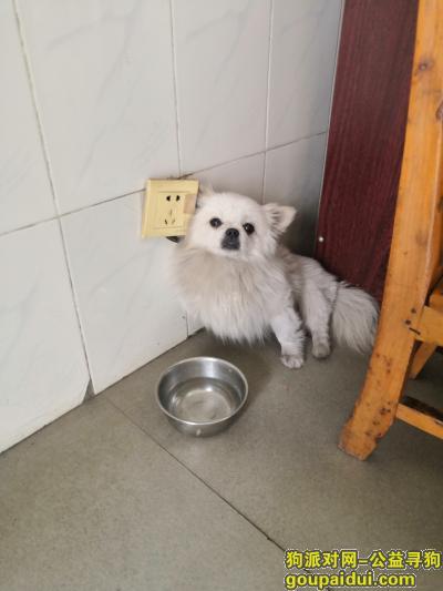 ,青羊区文翁路银行门口捡到一只小白狗,它是一只非常可爱的宠物狗狗,希望它早日回家,不要变成流浪狗。