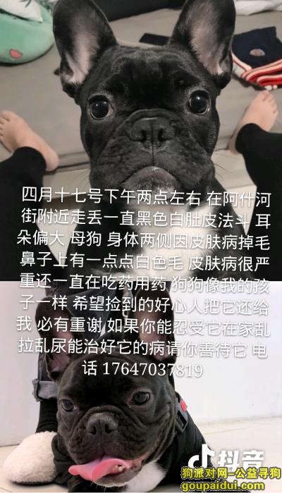 哈尔滨找狗,毛孩子走丢了 求求大家帮忙找找,它是一只非常可爱的宠物狗狗,希望它早日回家,不要变成流浪狗。