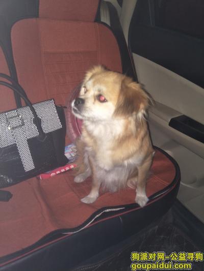 长治找狗,寻找爱犬笨笨,我的家人,它是一只非常可爱的宠物狗狗,希望它早日回家,不要变成流浪狗。