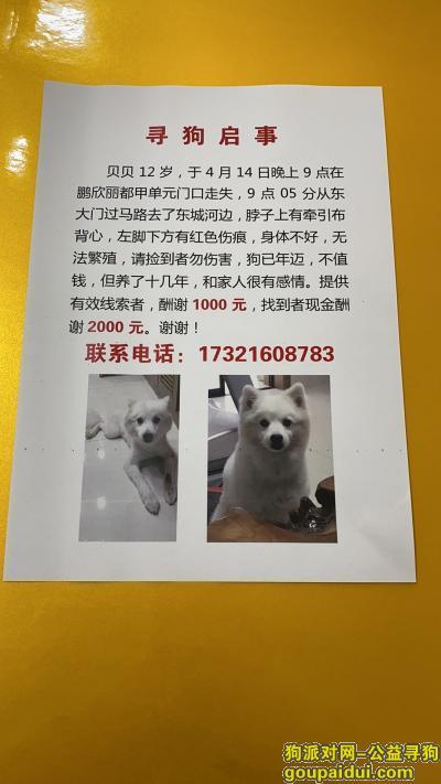 泰州找狗,泰州海陵区鹏欣丽都寻找12岁银狐,它是一只非常可爱的宠物狗狗,希望它早日回家,不要变成流浪狗。