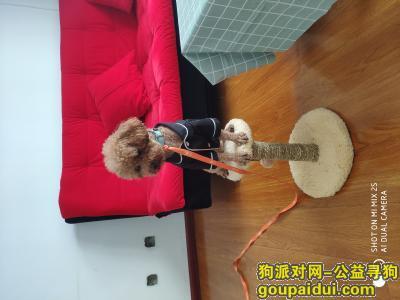 杭州捡到狗,捡到小狗,希望找到他的主人,它是一只非常可爱的宠物狗狗,希望它早日回家,不要变成流浪狗。