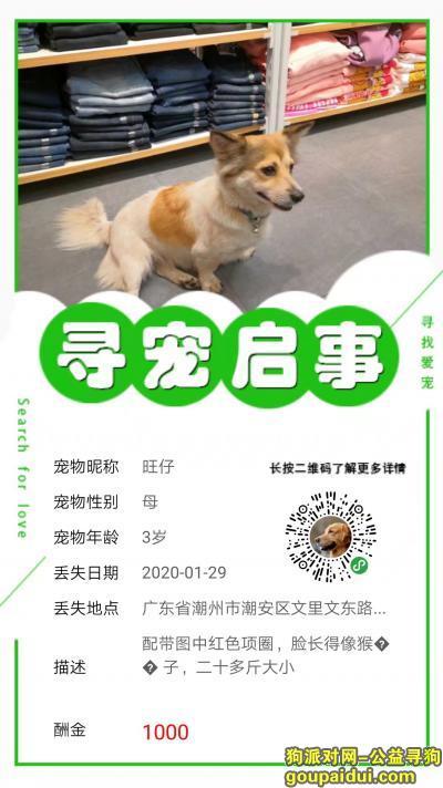 潮州寻狗启示,我放不下,请帮我找回它,它是一只非常可爱的宠物狗狗,希望它早日回家,不要变成流浪狗。