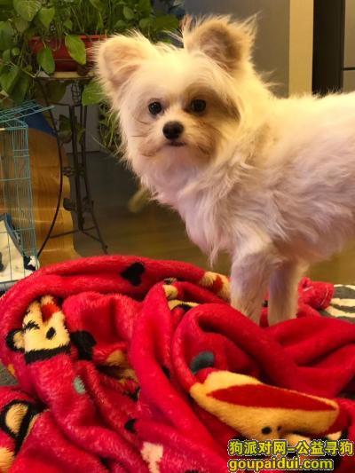 南京找狗,悬赏5千 寻找白色狗狗,它是一只非常可爱的宠物狗狗,希望它早日回家,不要变成流浪狗。