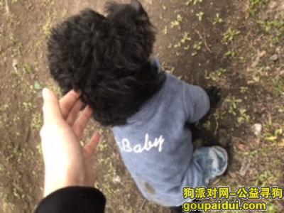 哈尔滨寻狗启示,已找到,它是一只非常可爱的宠物狗狗,希望它早日回家,不要变成流浪狗。
