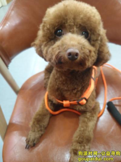 温州找狗,四月二十二号在瓯北镇三浦路附近丢的,它是一只非常可爱的宠物狗狗,希望它早日回家,不要变成流浪狗。