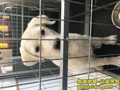 大同找狗,寻狗启示,找到必有重谢,它是一只非常可爱的宠物狗狗,希望它早日回家,不要变成流浪狗。