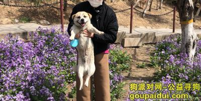 潍坊寻狗,北宫街白浪河桥底丢失小狗,它是一只非常可爱的宠物狗狗,希望它早日回家,不要变成流浪狗。