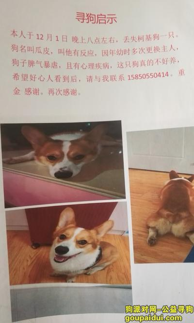 南京找狗,3000元寻狗,马上2周岁了,它是一只非常可爱的宠物狗狗,希望它早日回家,不要变成流浪狗。