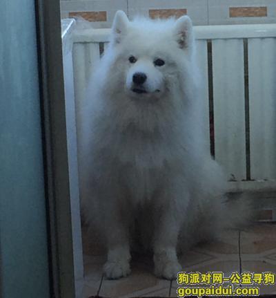 抚顺寻狗启示,2020年四月29日上午 卫校附近走丢,它是一只非常可爱的宠物狗狗,希望它早日回家,不要变成流浪狗。