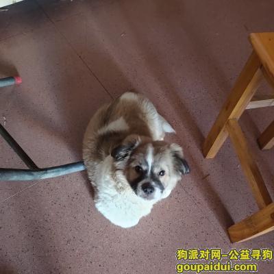 赣州寻狗启示,有线索的请联系我,如果被好心人捡到也请告诉我狗子安全。谢谢大家了,它是一只非常可爱的宠物狗狗,希望它早日回家,不要变成流浪狗。