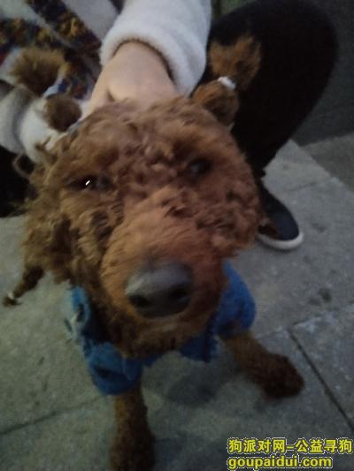 安顺寻狗网,寻找爱犬皮皮在王庄附近走丢,它是一只非常可爱的宠物狗狗,希望它早日回家,不要变成流浪狗。