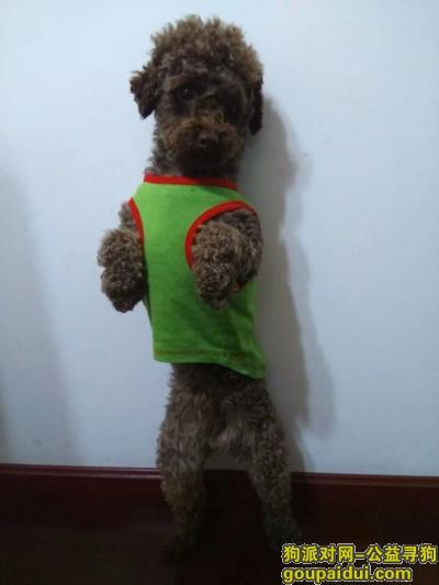 十堰寻狗,串串,你在哪里?快点回家吧!,它是一只非常可爱的宠物狗狗,希望它早日回家,不要变成流浪狗。