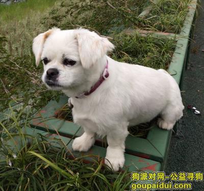 南充寻狗启示,寻狗启示,重金酬谢 名字叫多多,它是一只非常可爱的宠物狗狗,希望它早日回家,不要变成流浪狗。